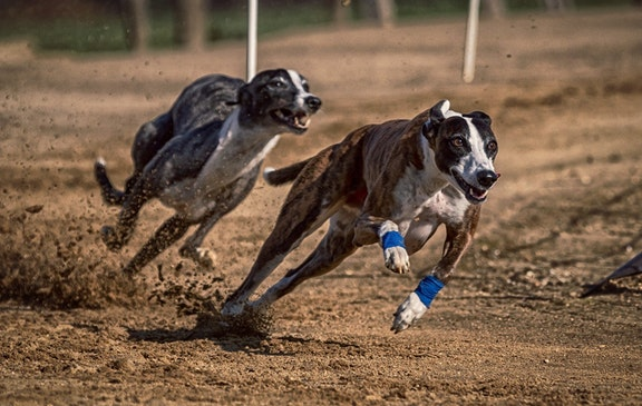 2021 greyhound derby betting how to earn bitcoins fasterskier