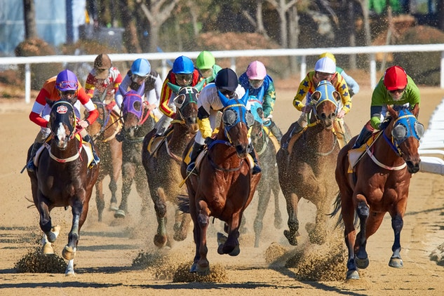 horse betting tips nzd