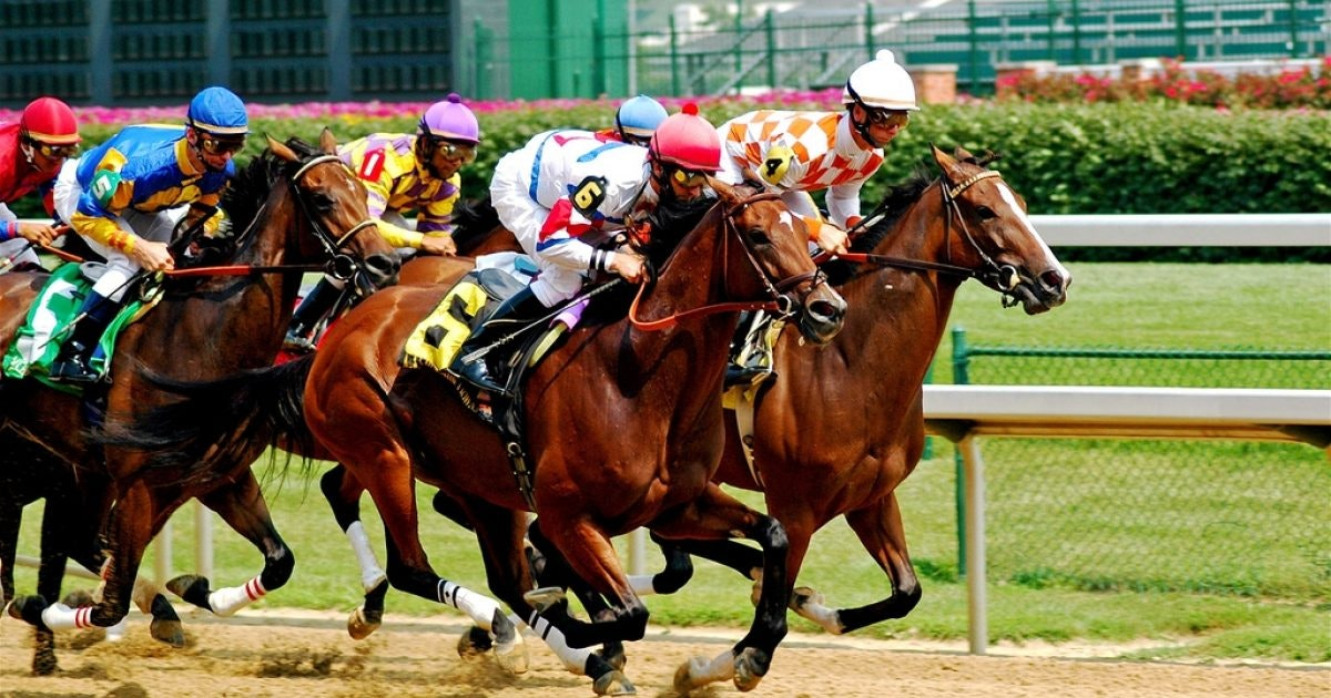Live Horse Racing Odds